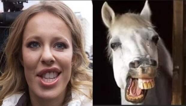 Лошадь заказывали? Почему у нас в народе так ненавидят Собчак
