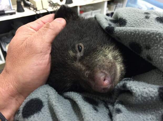 Парень спас медвежонка, рискуя не только свободой, но и своей жизнью