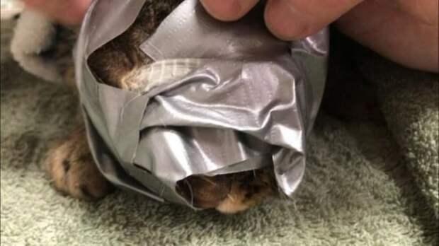 Спасение кошки, которую замотали в скотч и выбросили на улицу