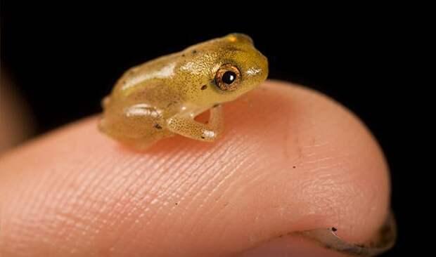 Микромир: самые маленькие вещи и живые существа