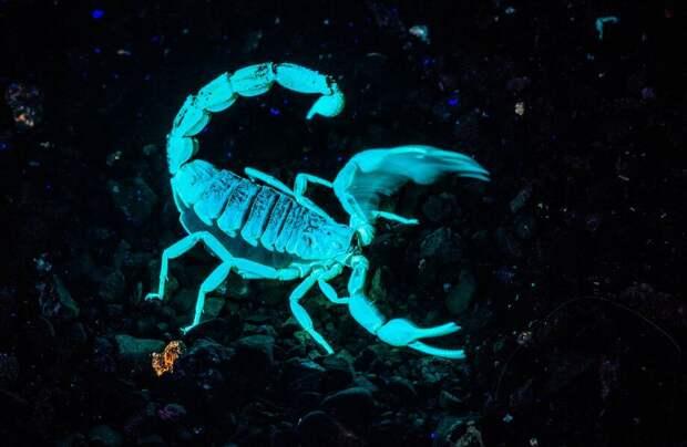 Видео: Зачем скорпионам флуоресценция