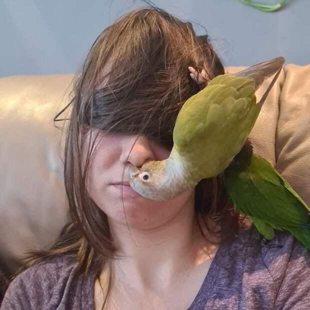 18 доказательств того, что попугаи тоже ласковые котики, только с перьями