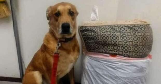 Убитый горем пес был очень напуган! Его вернули в приют, сложив игрушки в пакет…