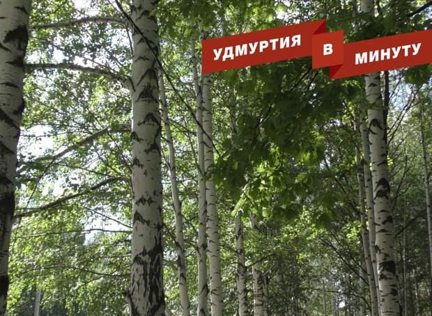 Удмуртия в минуту: особый режим в лесах Удмуртии и погодные качели