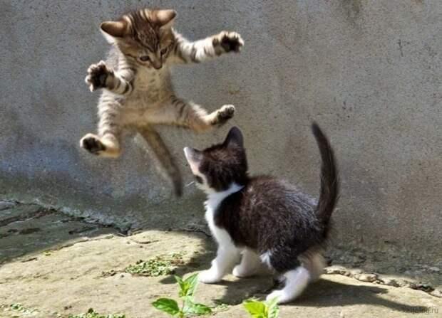 Одна кошка - хорошо, а две - лучше!