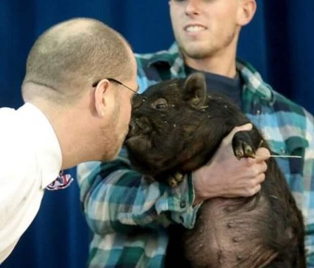 Директор школы поцеловал свинью (видео)