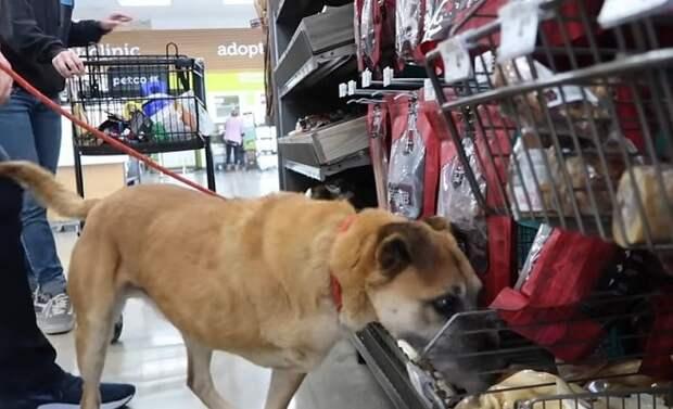 В магазине для животных, парень купил бездомной собаке все, во что она ткнулась мордочкой
