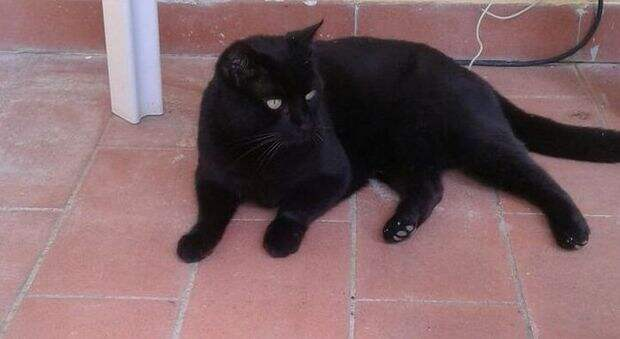 В Италии хозяева делят кота, жившего на две семьи