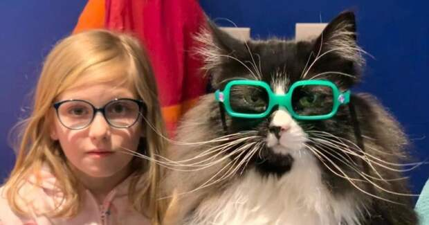 Хозяйка оптики взяла на работу кошку, которая… рекламирует очки