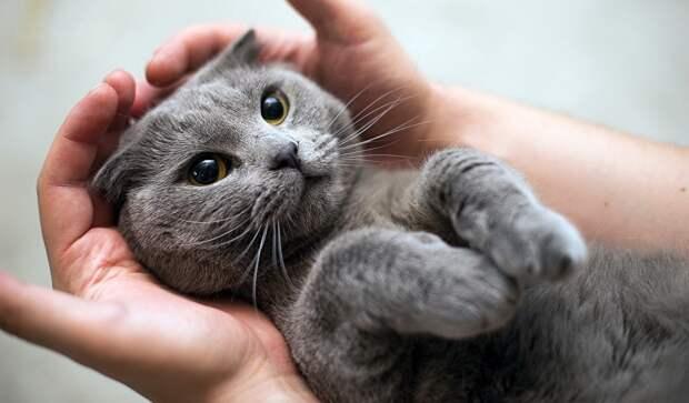 Мошенник ограбил фирму на $500 тысяч и почти всё спустил на милых котиков