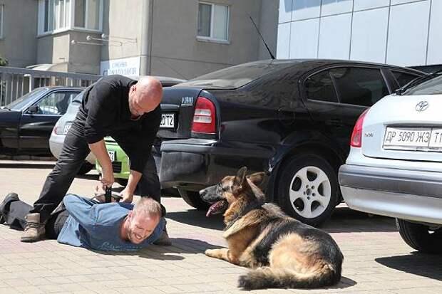 Украина грозит собачьим нашествием
