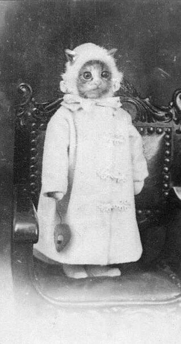 Еще в далеком 19 веке начали издеваться над котами Весь Мир, история, фотографии