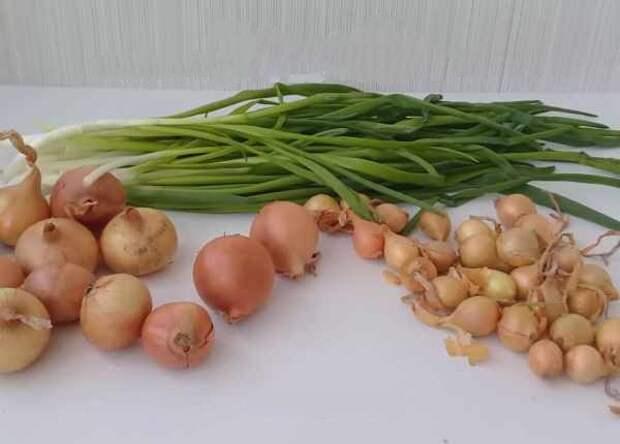 отобрать луковицы