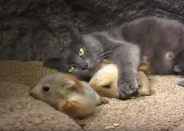 Кошка приютила 4 маленьких белочек, которые нуждались в маме