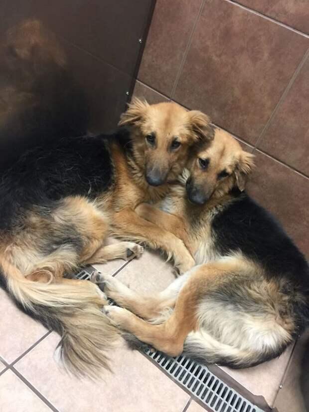 Две собаки из приюта обрели один любящий дом