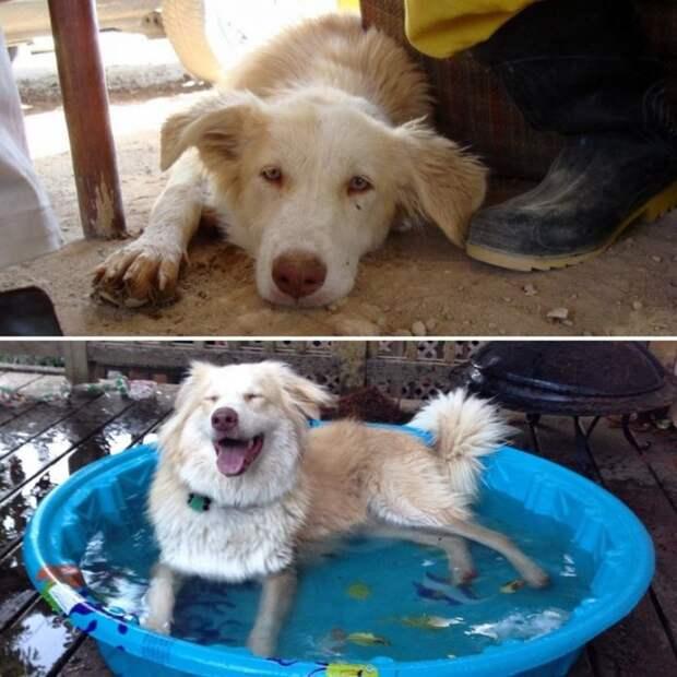 Невероятное преображение домашних питомцев, которые обрели семью добро, домашние животные, животные, забота, кошка, преображение, собака