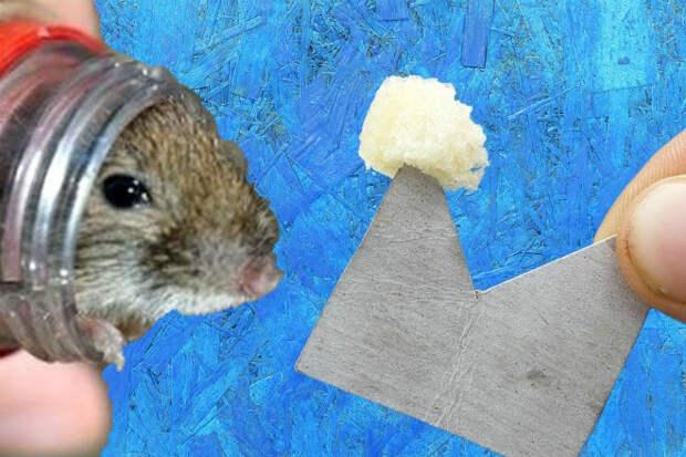 Ловушки для мышей за секунды