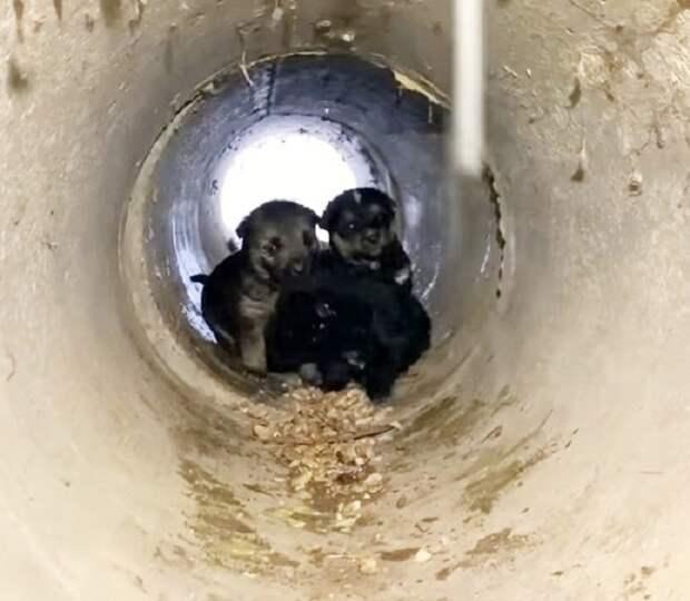 В зимний день волонтёры приехали спасать собаку, но оказалось, что от мороза прячутся и ее щенки
