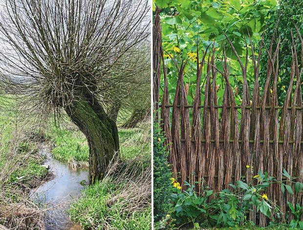 Слева: ива. Справа: ширма из пучков тонких прутиков оригинально отделяет одну зону сада от другой