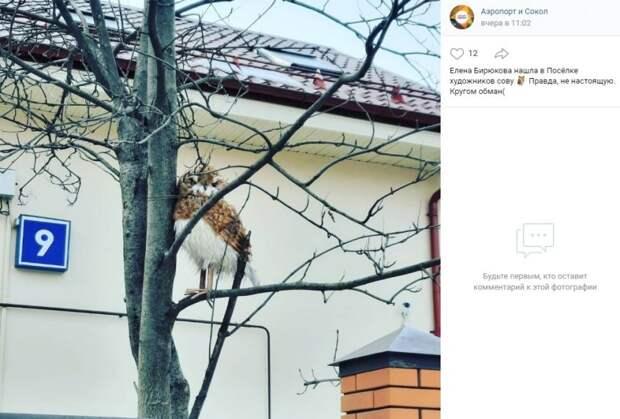 Фото дня: фальшивая сова в поселке Художников