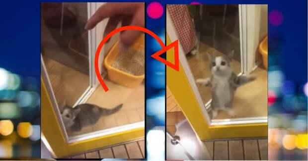 """""""Танец маленьких котят""""! Этот малыш ужжжасно скучал по своему хозяину – и вот что произошло с ним при встрече… ;)"""