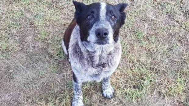 3-х летнюю девочку спас старый пес, он всю ночь согревал ее от холода