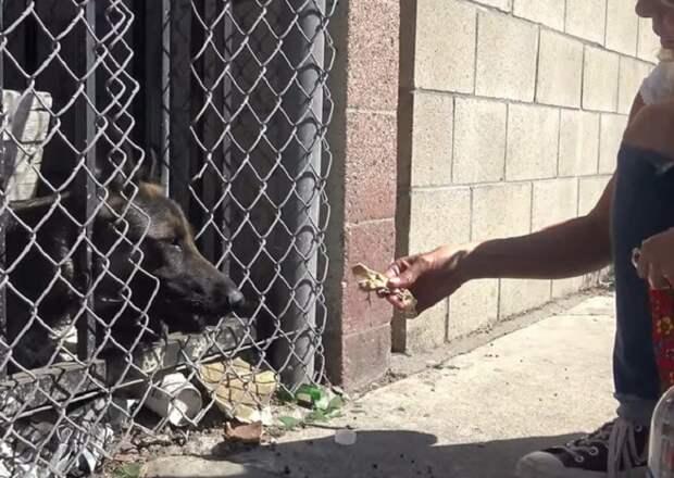 Собаку кормят