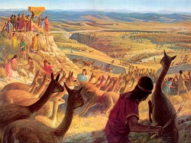Викунья-животное-Описание-и-образ-жизни-викуньи-2