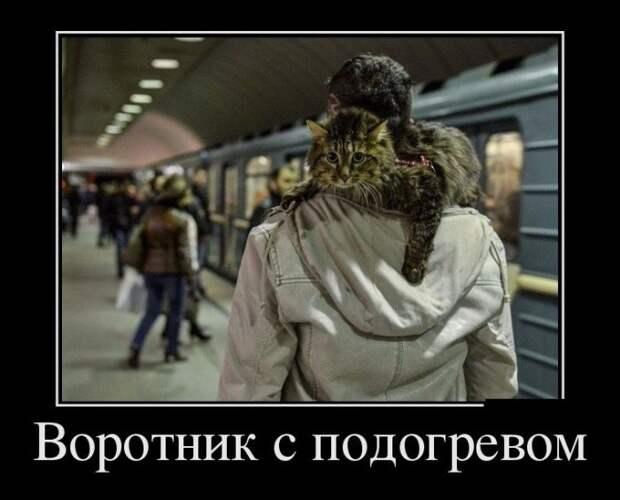 Зачетные и смешные демотиваторы из нашей жизни (11 фото)