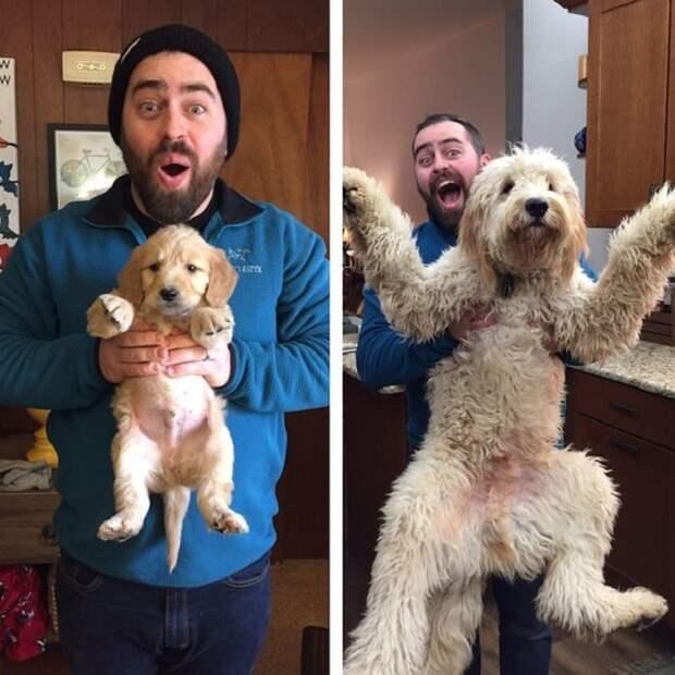 Из малыша вырос огромный пес