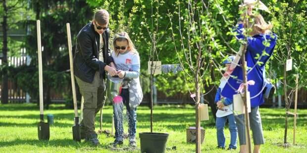 Именные липы, яблони и груши посадят жители СЗАО недалеко от дома