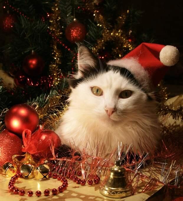 3166706_christmas_cat_by_mechanical2127d37ma09 (700x770, 366Kb)