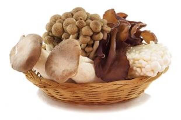 Кому нельзя грибы?