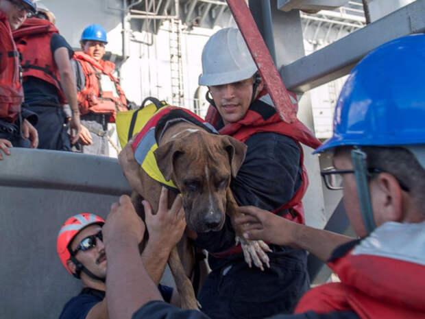 ВМС США спасли двух женщин с собаками, пять месяцев дрейфовавших в Тихом океане дрейф, женщина, собака, тихий океан