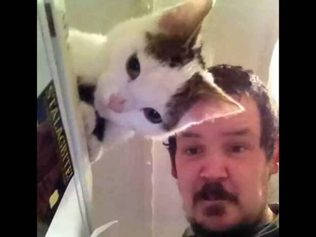 39 раз, когда кто-то поймал кота в самый ответственный момент