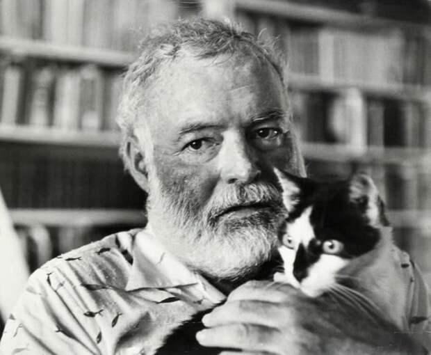 Шестипалые коты Хемингуэя жизнь, история, фотография