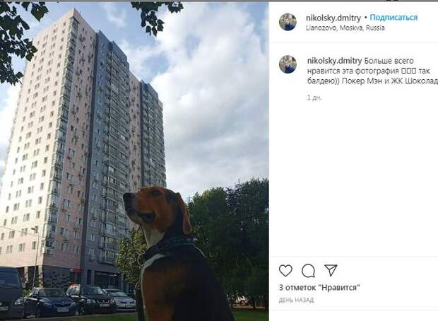 Фотокадр: солидный пёс у солидного дома
