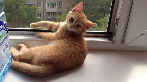 """""""Апчхи!"""" – вздрагивал больной бездомный котёнок, сидя в луже. Солнечный малыш отчаялся растопить сердца людей"""
