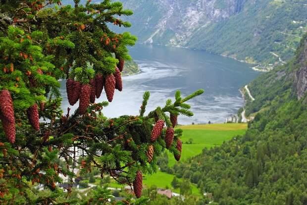 fjords28 Самые красивые фьорды Норвегии