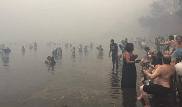 В Греции из-за лесных пожаров уже погибло 50 человек