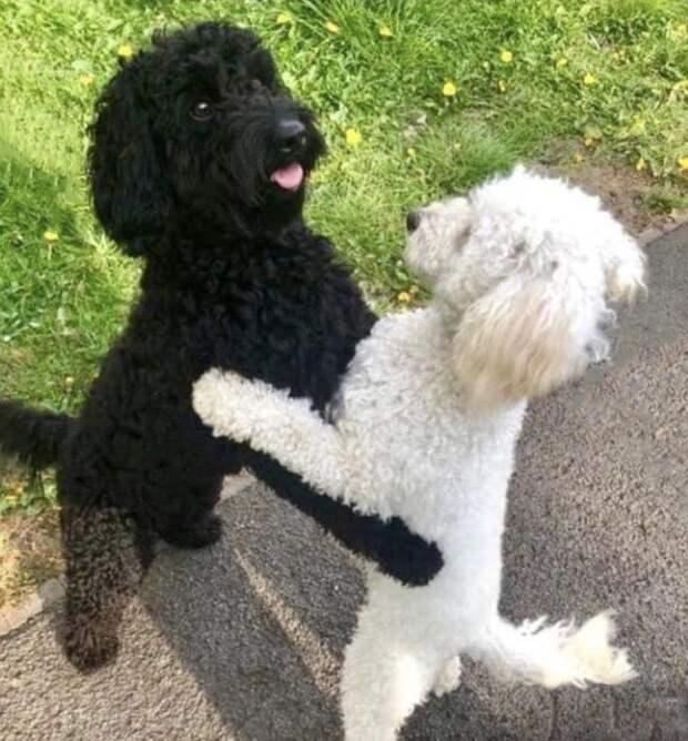 Пёсик встретился со своей белой копией, они обнялись так, что все заумилялись