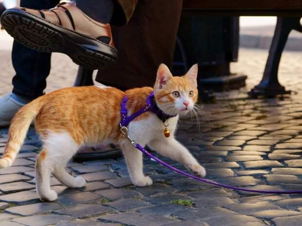 Вот почему вы обязаны выгуливать не только собак, но и кошку!