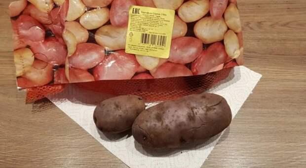 """Лиловый картофель сорта """"Сирень"""". Вкусный"""