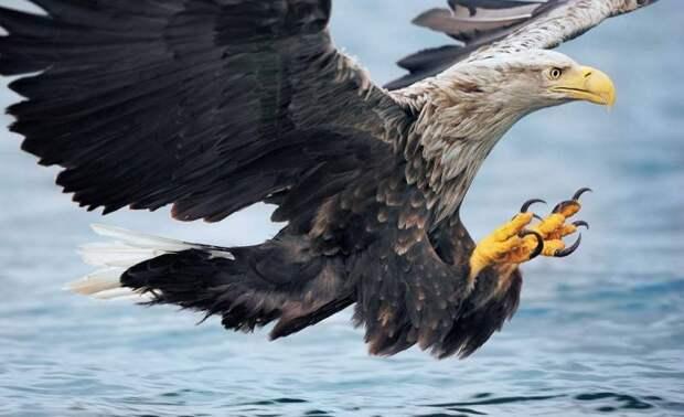 В Краснодарском крае редкую птицу забрали у фотографа и выхаживают в зоопарке