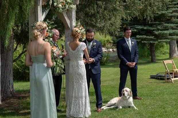 пес на свадьбе у хозяина