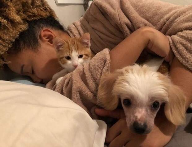 Пес кот и хозяйка