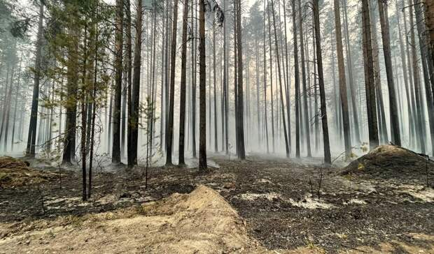 Жителям Карелии запретили посещать леса