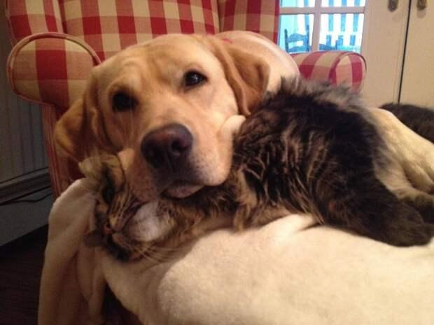 25 фотодоказательств того, что кошки и собаки умеют дружить