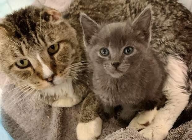 Котенок возле кота