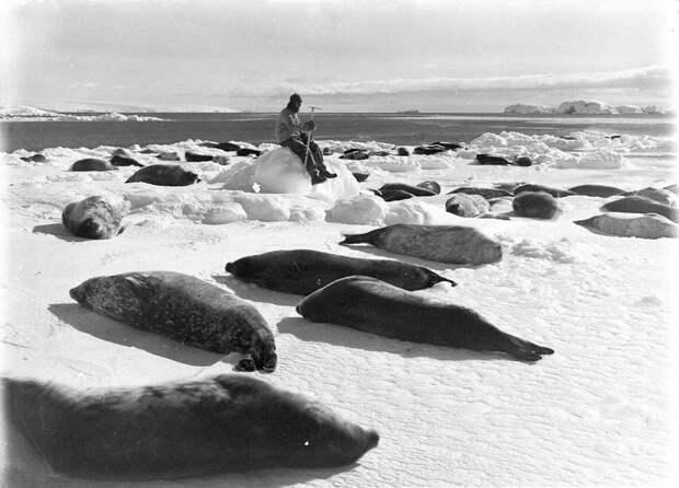 Первая Австралийская антарктическая экспедиция в фотографиях Фрэнка Хёрли 1911-1914 46